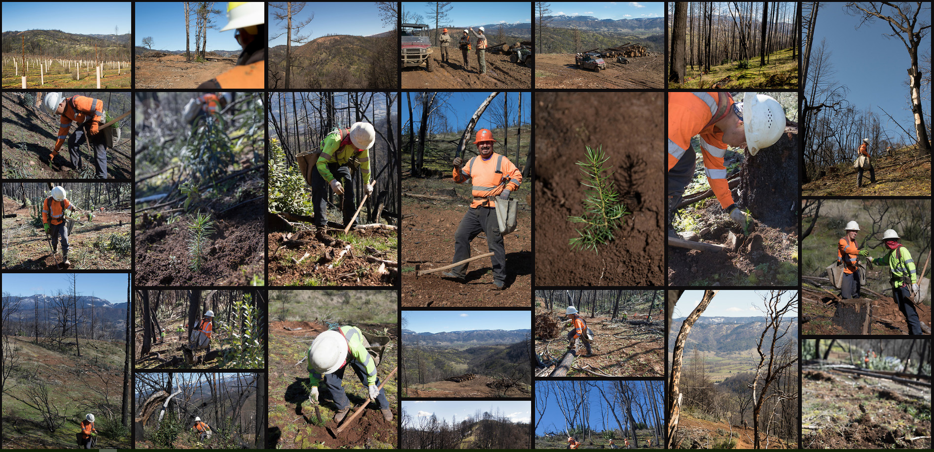 Beautiful pictures of trees being planted